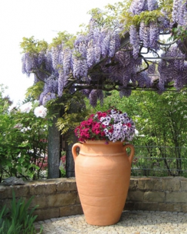 Antik Pflanzamphore terracotta GARANTIA Exclusive-Line Bild 2
