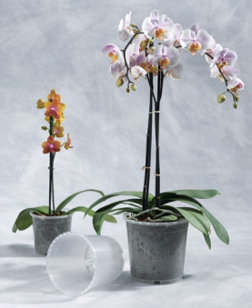 Geli Blumentopf  / Pflanztopf Orchideentopf Ø 12 cm transparent Bild 1