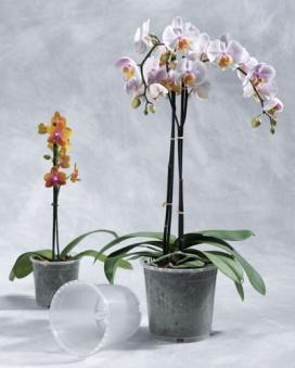 Geli Blumentopf / Pflanztopf Orchideentopf Ø 15 cm transparent Bild 1