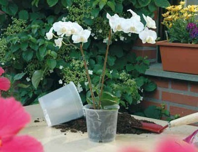 Geli Blumentopf / Pflanztopf Orchideentopf Ø 19 cm transparent Bild 1