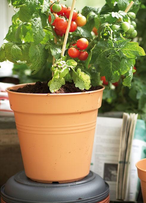 Blumentopf / Pflanzkübel elho Green Basics Ø 21cm H 19cm mild tonrot Bild 1