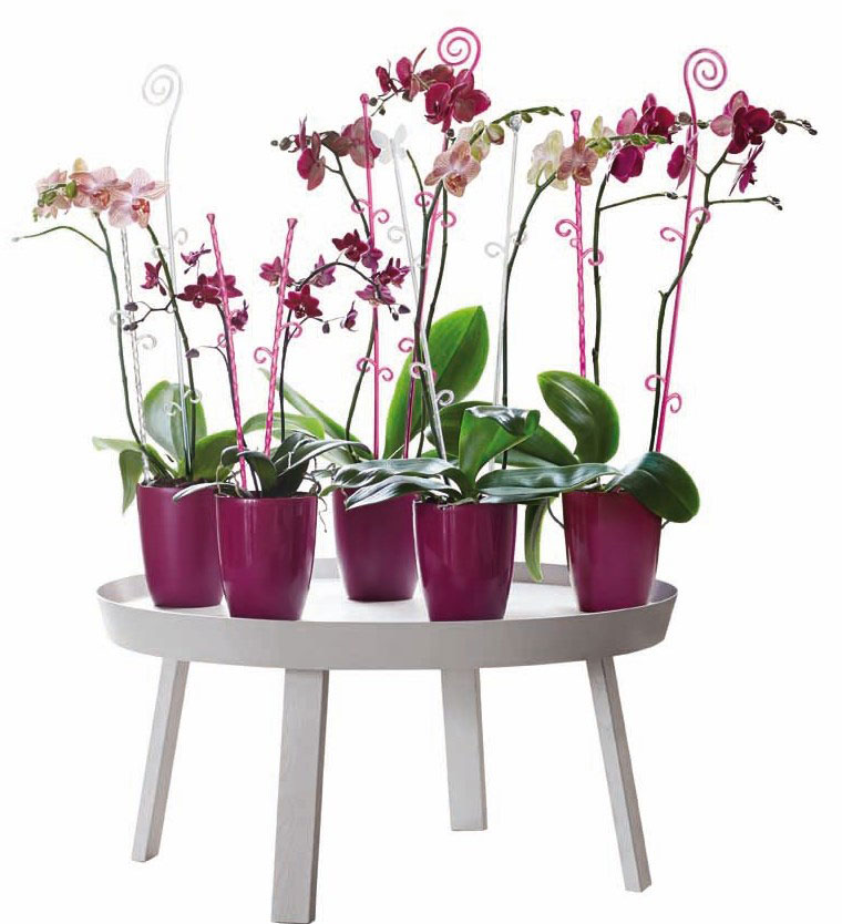 Orchideenstab elho Orchideco Elegance 55cm transparent Bild 2
