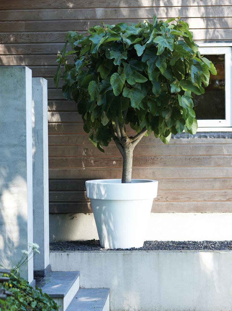 Pflanzgefäß / Pflanztopf elho Pure Round Ø 100cm weiß Bild 1