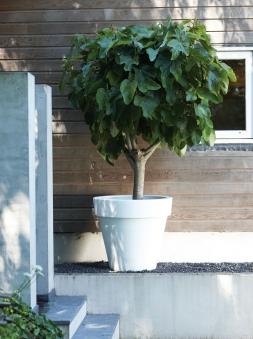 Pflanzgefäß / Pflanztopf elho Pure Round Ø 60cm weiß Bild 1