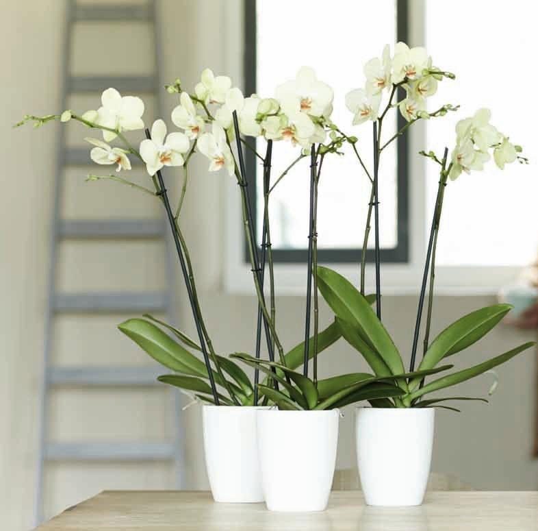 Pflanztopf / elho Orchideentopf Brüssel Ø 12,5 / H15 cm weiß Bild 2