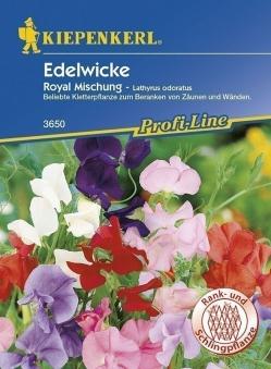 Kiepenkerl Saatgut Kletterpflanze Edelwicke Lathyrus Royal Mischung Bild 1