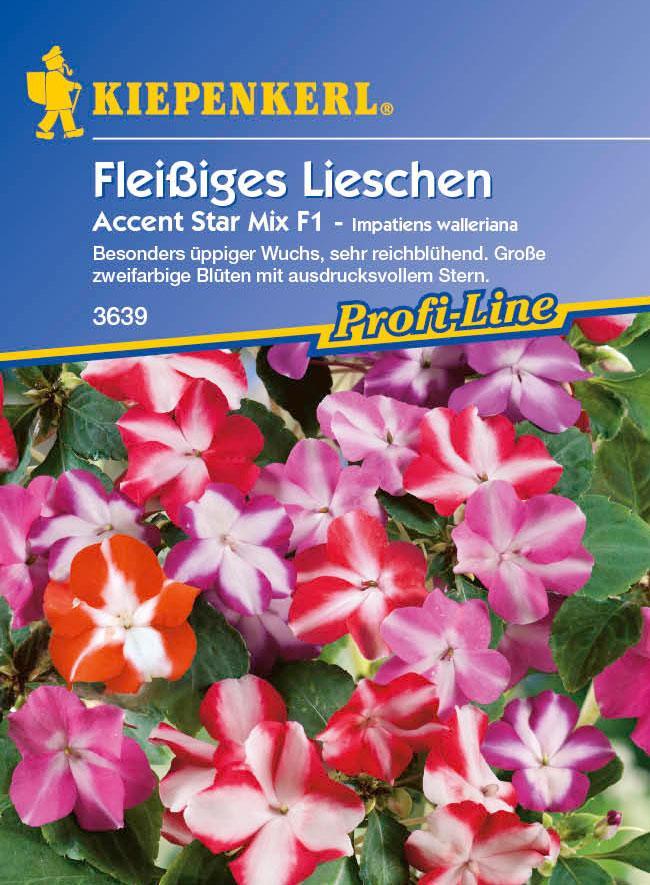 Saatgut Fleißiges Lieschen  Impatiens 'Accent Star Mix ' Bild 1