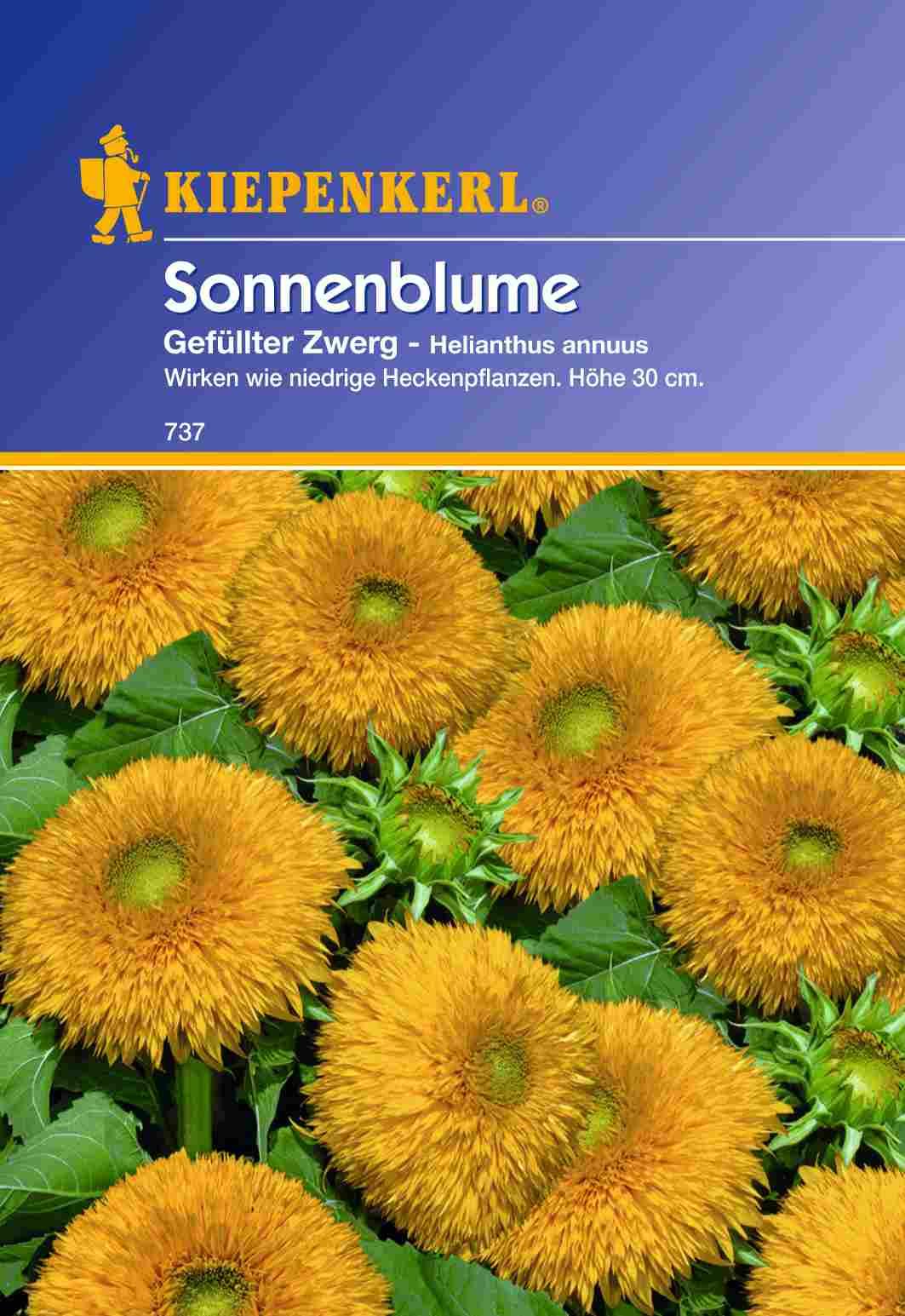 Saatgut Sonnenblumen Gefüllter Zwerg Bild 1