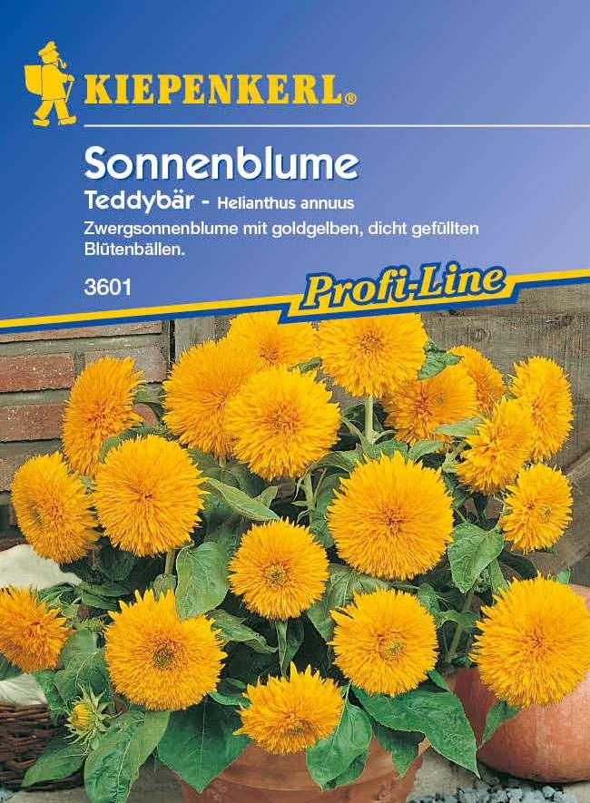Saatgut Sonnenblumen Teddybär Bild 1