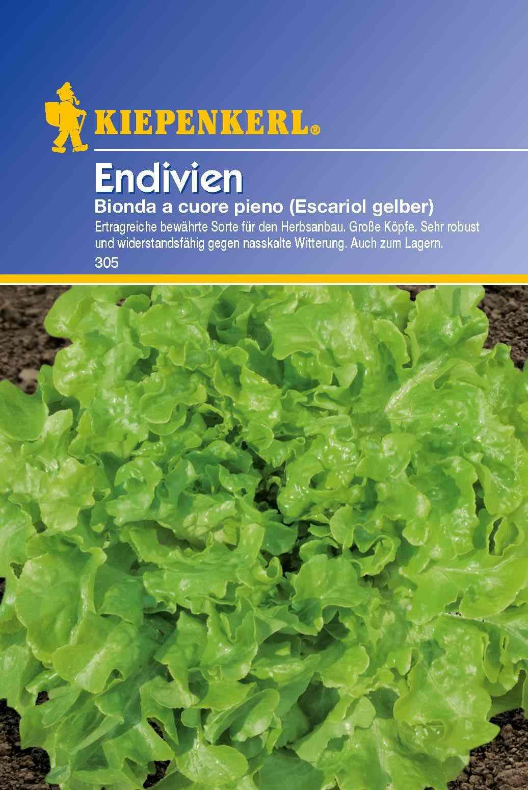 Saatgut Salat Bionda a cuore pieno (Escariol gelber) Bild 1