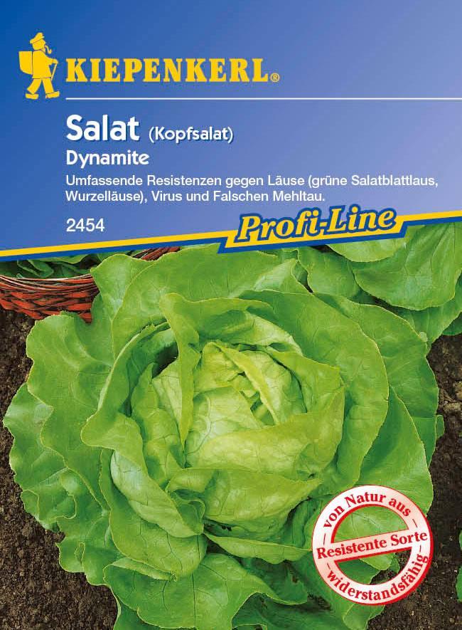 Saatgut Salat Dynamite Bild 1