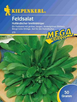 Saatgut Salat Holländischer breitblättriger, 50 g Mega-Pack Bild 1