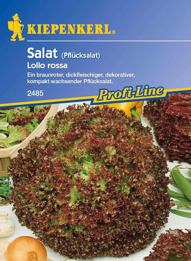 Saatgut Salat Lollo Rossa, rot Bild 1