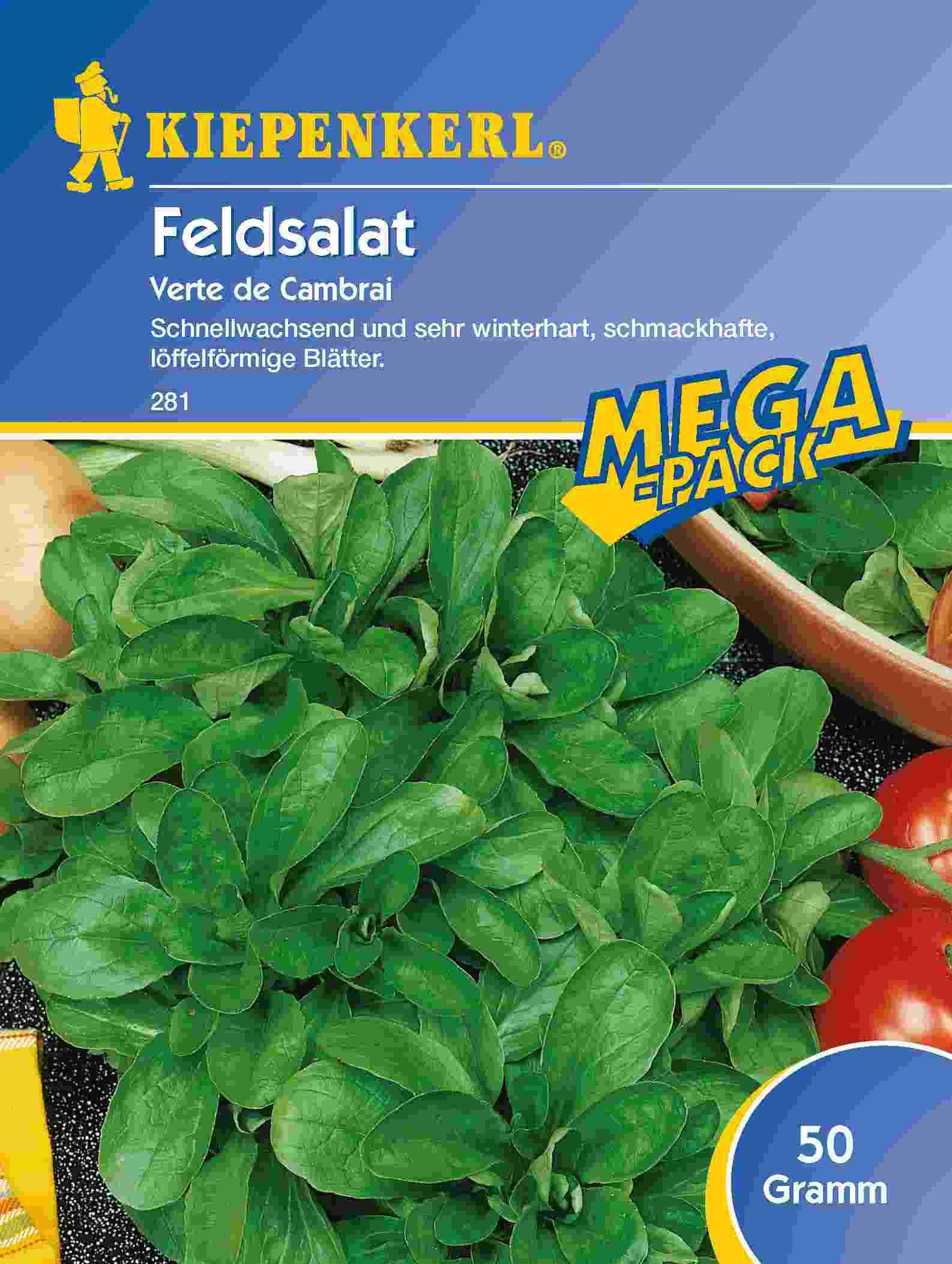 Saatgut Salat Verte de Cambrai, 50 g Mega-Pack Bild 1
