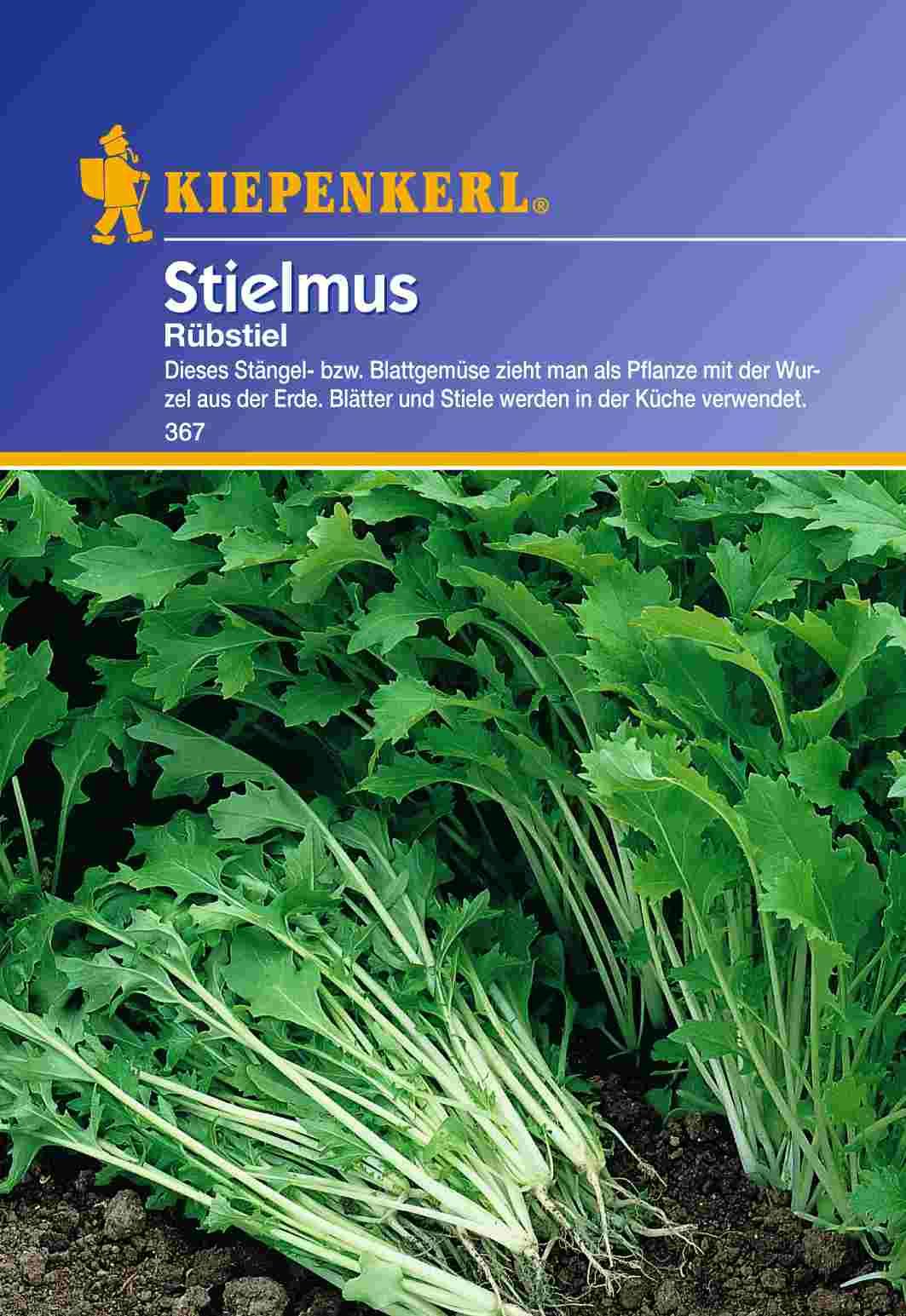 Saatgut Stielmus/ Rübstiel Stielmus / Rübstiel Bild 1
