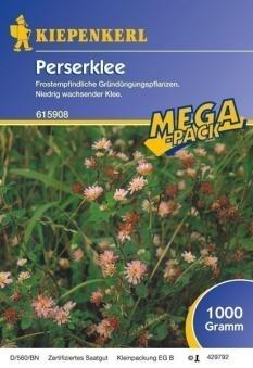 Gründünger-Saaten Perserklee, 1 kg Trifolium resupinatum Bild 1