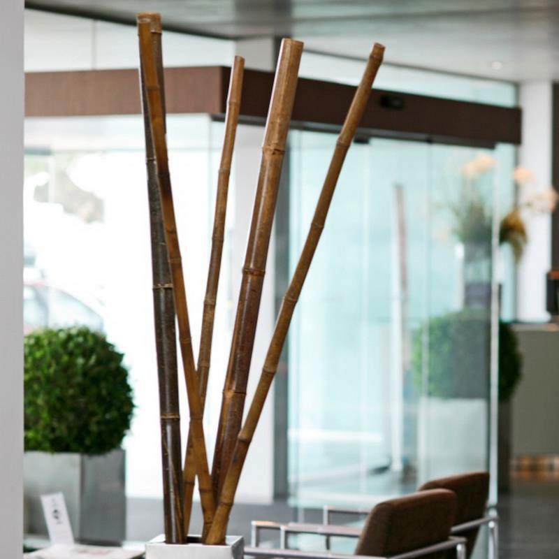 Bambusrohr Tonkin Noor 180xØ6-7cm teak Bild 2