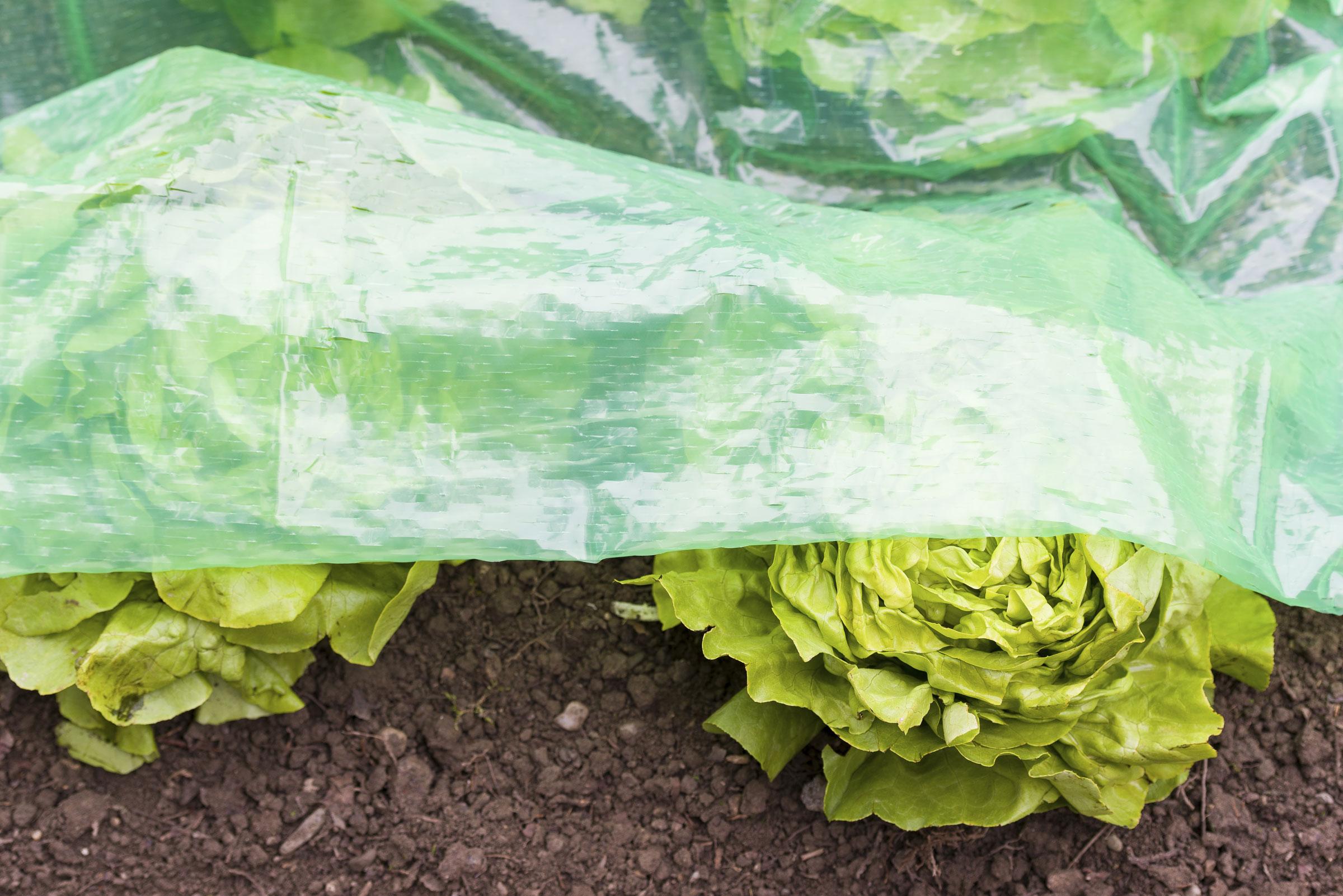 Frühbeet Schlitzfolie mitwachsend 1,4x7,2m - bei edingershops.de