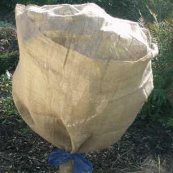 Winterschutz für Pflanzen / Jute Schutzvlies 500x105cm Bild 1