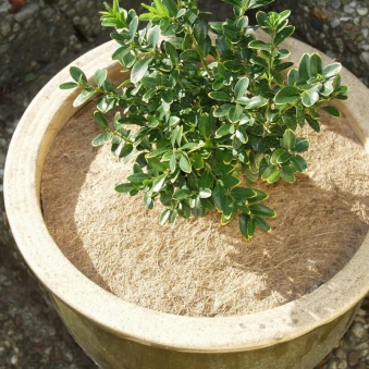Winterschutz für Pflanzen / Kokosscheibe Noor Ø37cm Bild 1