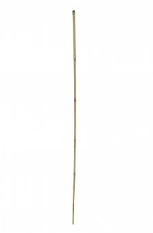Bambusstab / Dekorationsstab floraworld 150cm Bild 1