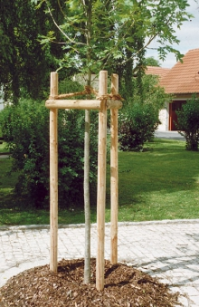 Pflanzpfahl / Pflanzpfähle Ø 10cm kesseldruckimprägniert 150cm Bild 1