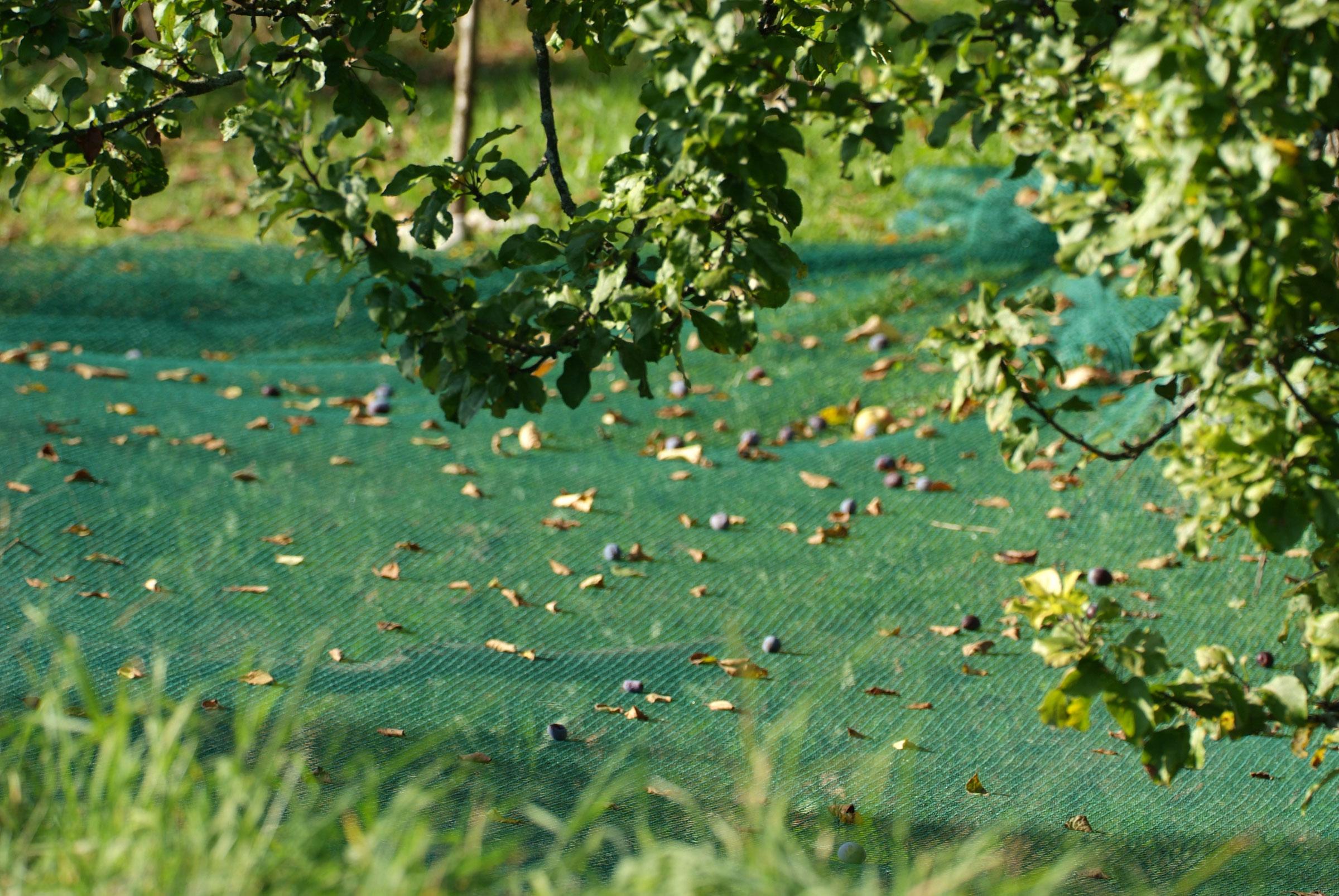Laubschutz Netz grün für Teich und Wasser 10x4m Bild 1